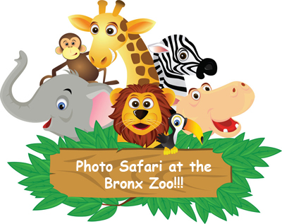DIY Photo Safari #23: The Bronx Zoo - a Jungle Safari!