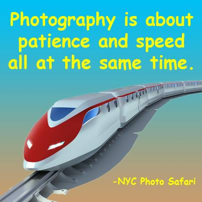 NYC Photo Safari tours